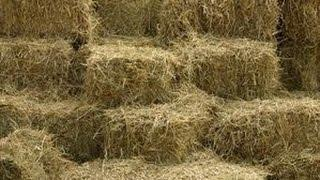 STRAW BALE BEDS